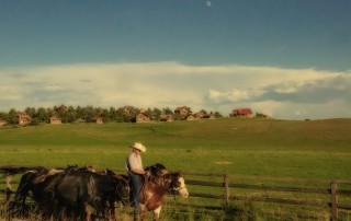 Long Some Cowboy (piqs.de ID: cf773539d02e3dcbb8a61875314c6307)